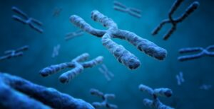 Telómeros, La Longitud De Nuestra Vida